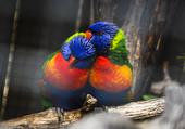 Puzzle L'amour en couleurs