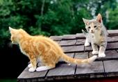 2 chatons sur le toit