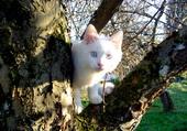 Puzzle Chat dans l'arbre