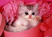 chaton panier rose