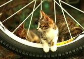 Puzzle chat sur roue de bicyclette