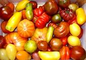 C'est des tomates!