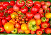 C'est encore des tomates!!