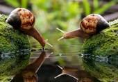 Puzzle Escargots qui boivent