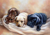 les 3 chiens