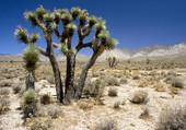 Rares végetaux du desert Californ