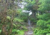 Puzzle Chemin en Irlande.