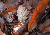Sol de forêt d'automne