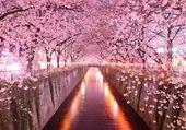 allée arbres roses