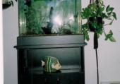 home made aquarium