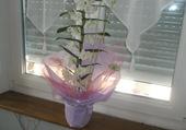 nouvelle forme d'orchidée