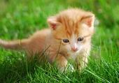 le chaton dans l'herbe