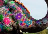 Puzzle elephant inde