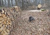Abattage et bois de chauffage