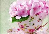 fleur rose par hélène