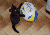 rugby chaton a s m