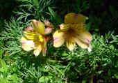 Puzzle fleurs de bretagne