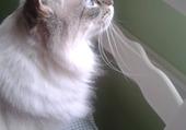 Mister cat  !!