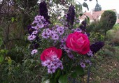 roses et asters