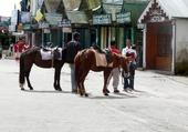 Les chevaux de Gangtok