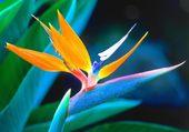 Belle Fleur Tropicale