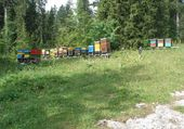 Puzzle les abeilles de Werner