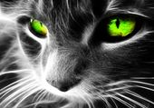 Puzzle Le chat aux yeux verts