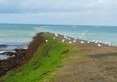 Ile de Ré plage Phare Baleines