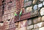 Les perroquets du Qutab Minar