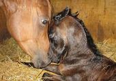 Puzzle Maman et Bebe