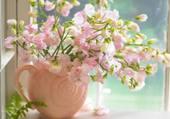 pois de senteur roses par hélène