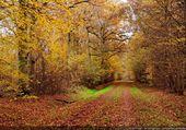 Une allée en automne