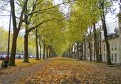 Le coeur d'automne !!