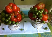 Tomates de Gally