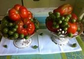 Tomates de Gally