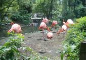 la famille flamand rose