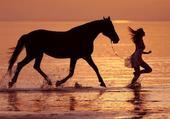 Mon cheval adoré