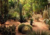 un jardin de cactées