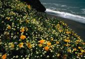 fleurs de rocaille sur plage