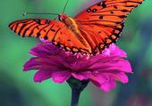 Puzzle papillon-fleur
