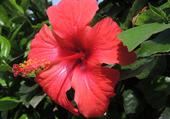 Fleur d'Agadir