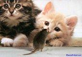 Puzzle chat souris