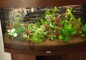 aquarium  éxotique