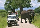 Puzzle safari Kenya