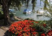 Fleurs au bord du Léman
