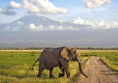 Kenia safari elephant
