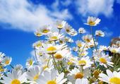 belles fleurs printanière