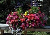 Corbeille de fleurs à Val d'Isère