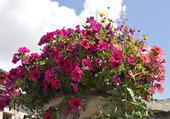 Muret fleuri (3)