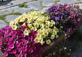 Tronc fleuri